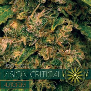 VISION CRITICAL AUTO VISION SEEDS