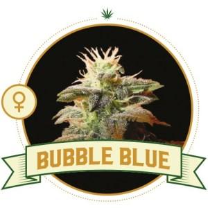 Bubble Blue Fem City Seeds Bank