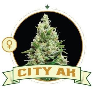 City AK Fem City Seeds Bank