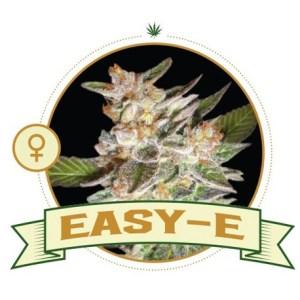 Easy – E Fem City Seeds Bank
