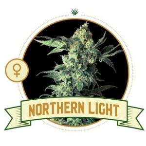 Northern Light Fem City Seeds Bank
