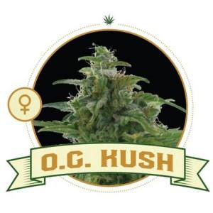 OG Kush Fem City Seeds Bank