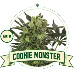 Cookie Monster Auto City Seeds Bank