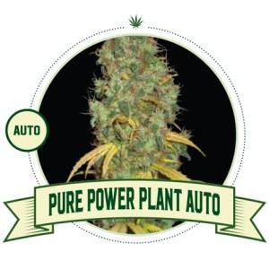 Pure Power Plant Auto City Seeds Bank