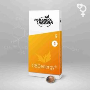 CBDenergy Fem Paradise Seeds