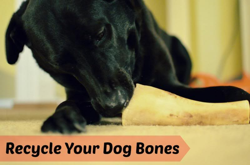 Save money on dog treats by reusing them!