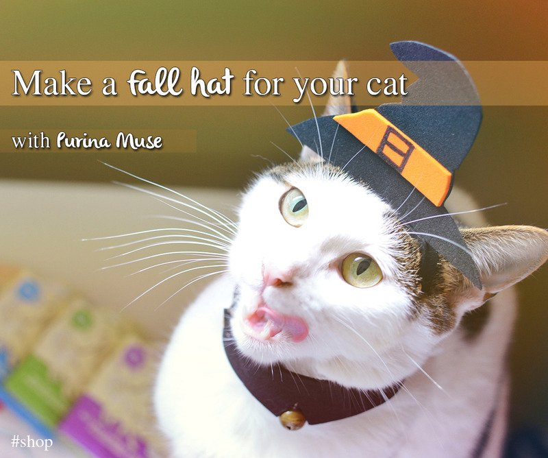 a fall hat for your cat
