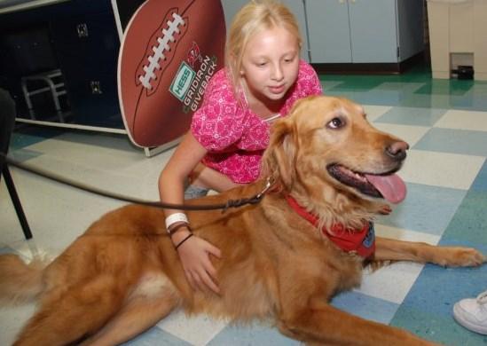 Riley - Golden Retriever Rescue of Mid Florida