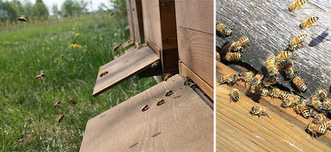 Bienen-im-Anflug