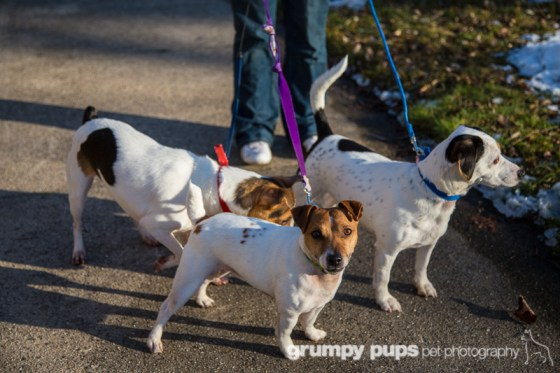 shelley irwin's three dogs, shot for dogs unleashed magazine