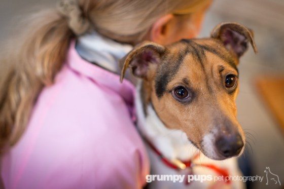 shelley irwin with one of her terriers, grumpy pups pet photography