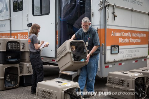man unloads rescued jack russell terriers from ASPCA truck at the Kent County Animal Shelter, grumpy pups pet photography