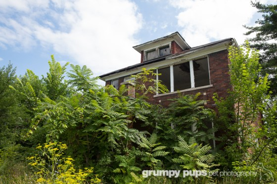 Abandoned Detroit house, grumpy pups pet photography