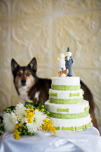 dog with wedding cake, grumpy pups pet photography