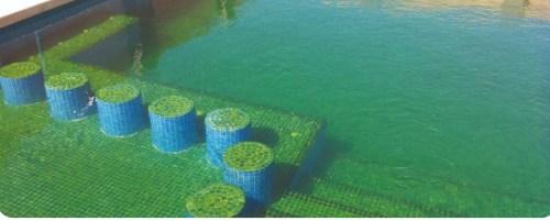 Quitar algas amarillas de la piscina
