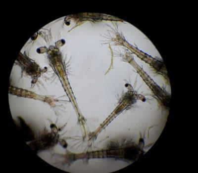 Vista microscópica de gambas