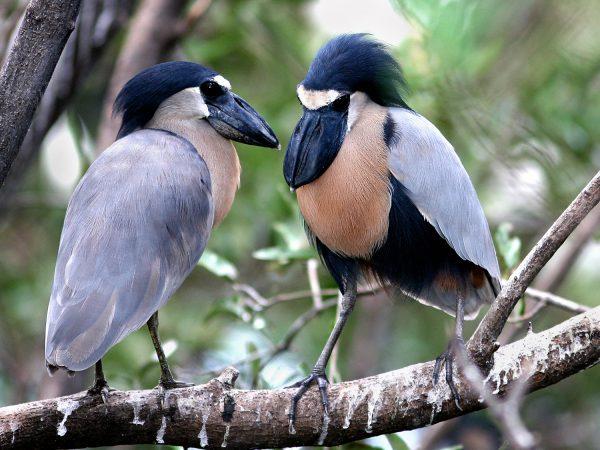 Aves sobre una rama de un árbol