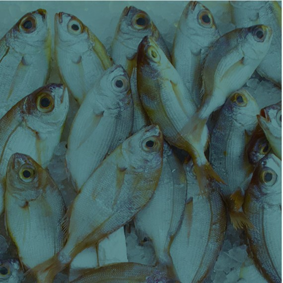 FROZEN FISH MAY BE BETTER THAN FRESH ONE