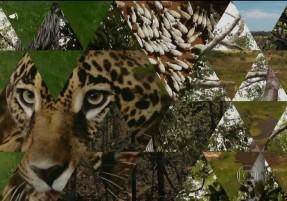 Amazonia SA Episódio 4 MidiaGEO