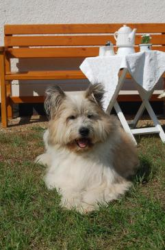 Pension Lenz 028 Hund groß
