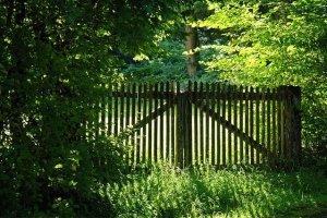 Pests that Damage Wooden Fences