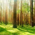 Una società ecologica a 2.000 Watt