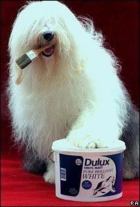 essex-decorator-dulux-dog