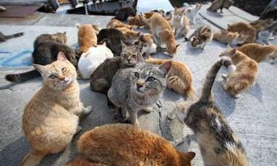 colonia-felina