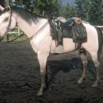 Buttermilk Buckskin Kentucky Saddler Rdr2 Red Dead Online Horses Database Statistics Red Dead Redemption 2