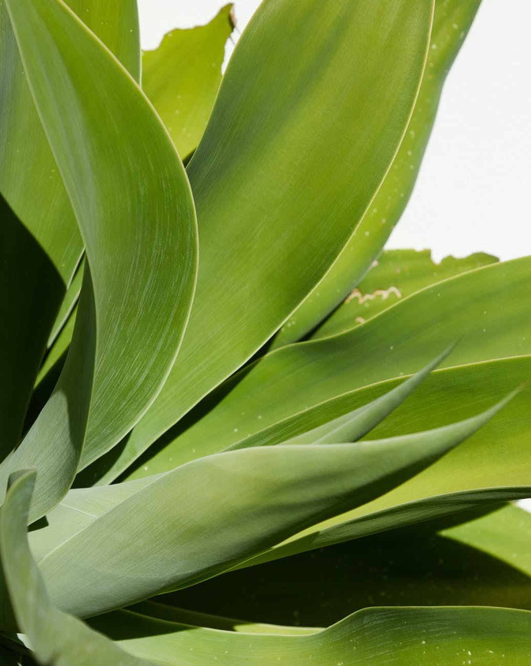 leaves of green potted plant