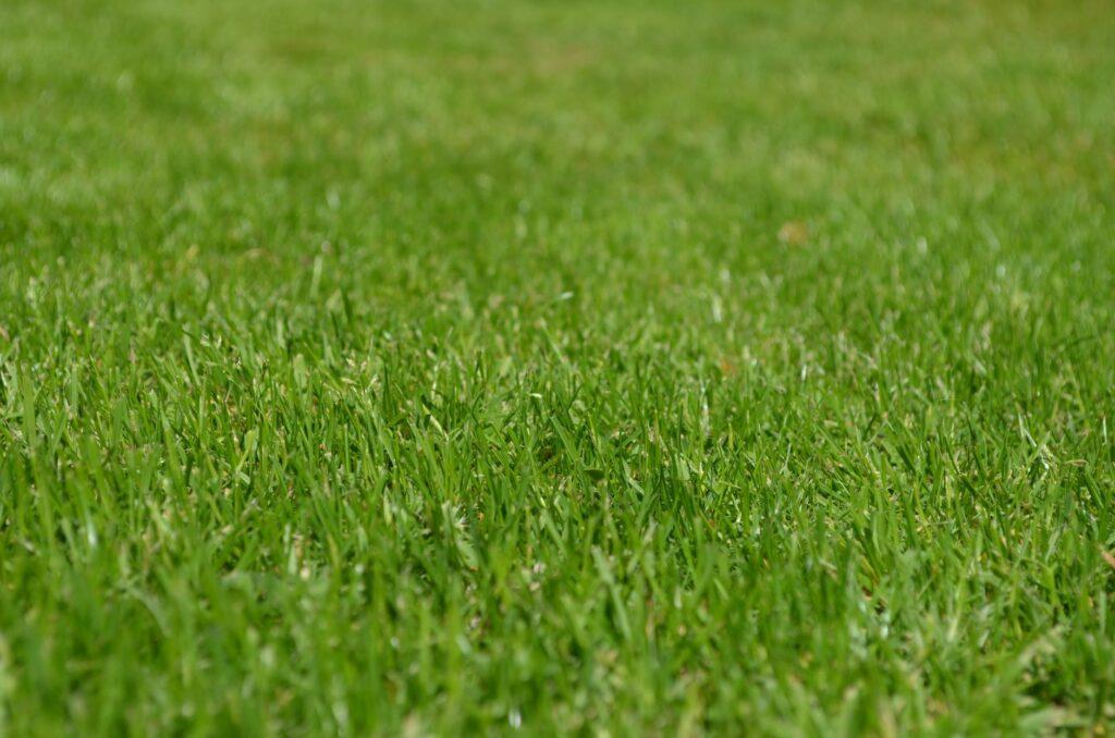 Grass GTF Nursery