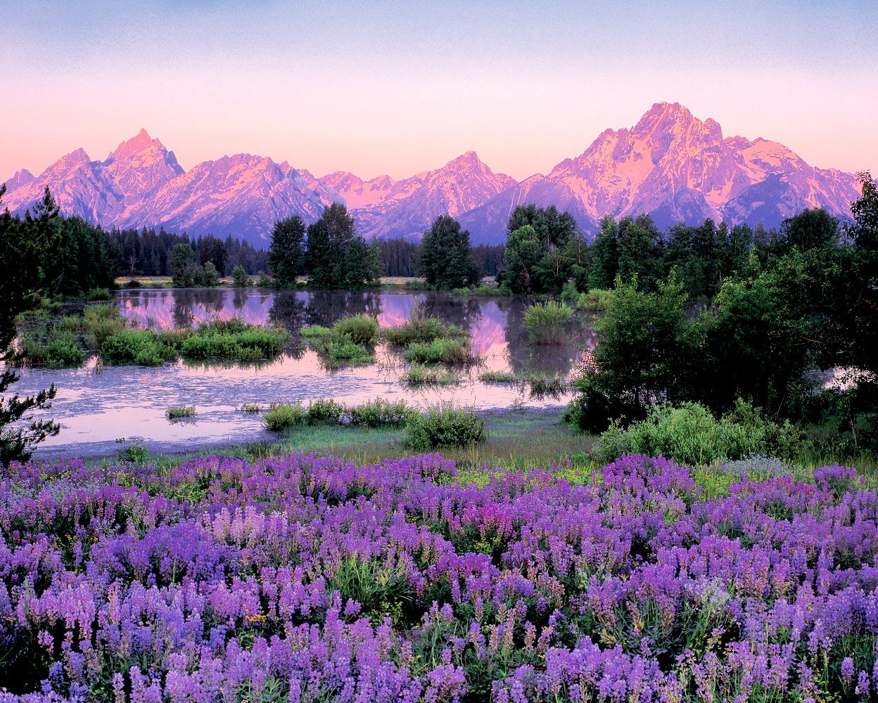 Grand Jenny Lake Teton Sunrise