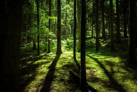 Ecologische en duurzame tuinmaterialen: voor de toekomst!