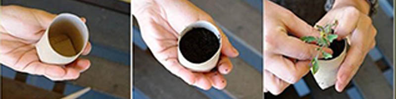 Plantar en semillero reciclado