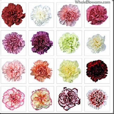 National Flower Series–Southern Europe 1– Kingdom of Spain - Dianthus Caryophyllus (Carnation)