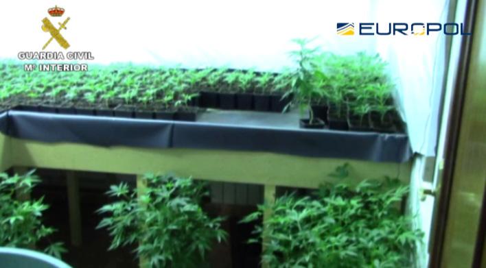 La Guardia Civil desmantela dos plantaciones de marihuana tipo 'indoor' de alto rendimiento