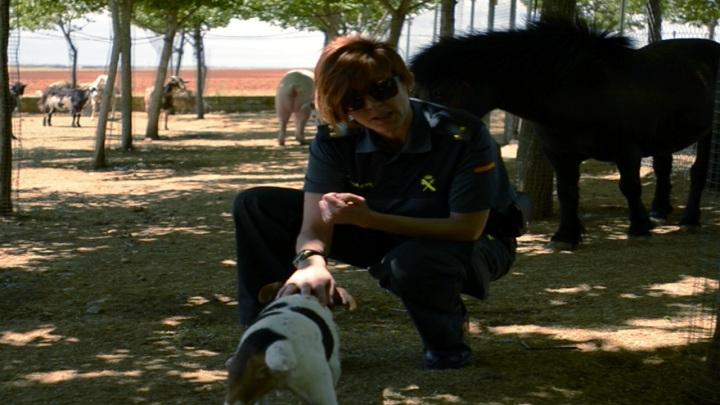 La Guardia Civil detuvo o imputó a 115 personas por maltrato de animales domésticos durante el primer semestre