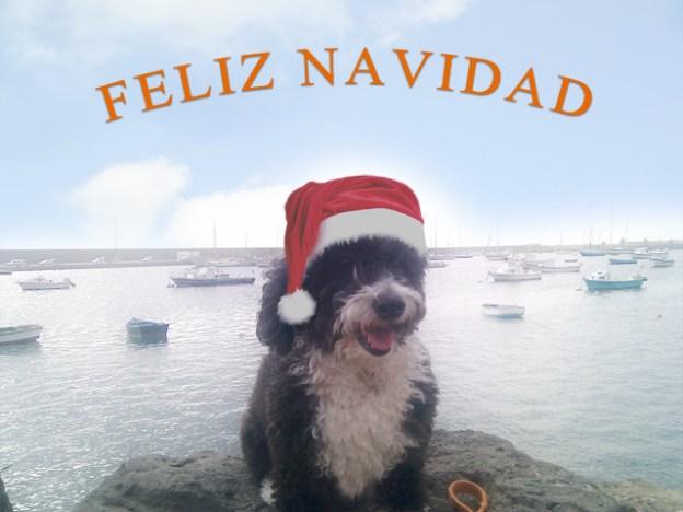 Feliz Navidad les desea Guau y Miau