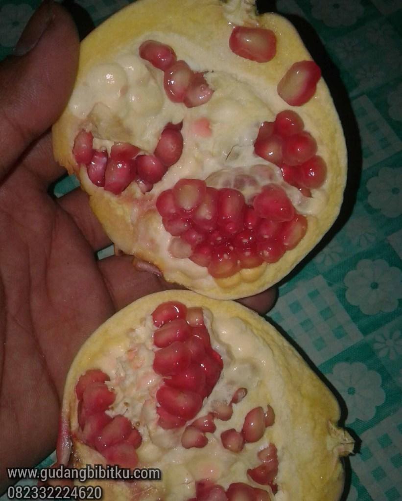 Harga buah delima merah