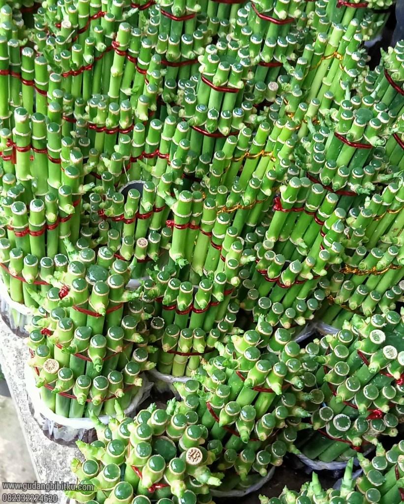 Harga bambu hoki