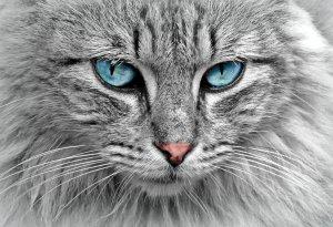 Krankenversicherung für Katzen