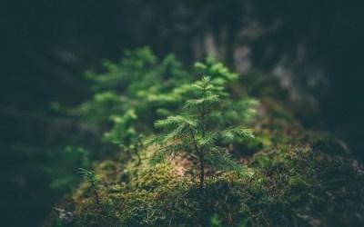 Osservazioni alla bozza preliminare della Strategia Forestale Nazionale