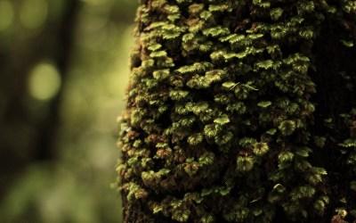 Come si salva una foresta