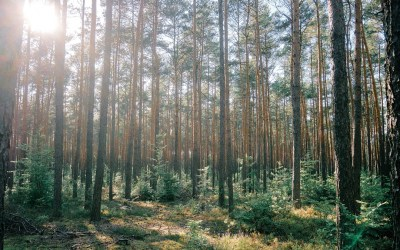 Le foreste italiane meritano un'informazione corretta