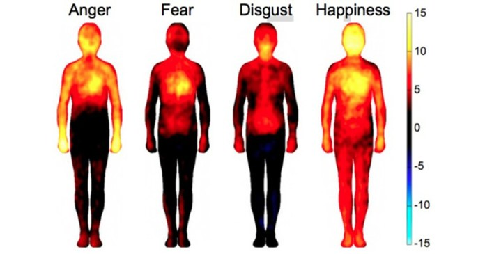 Effect of anger on body