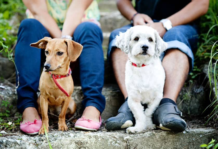 Image of white and brown dog with its owners.