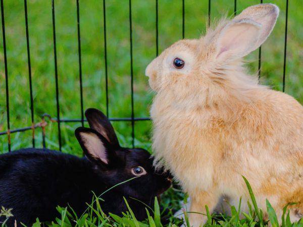coelhos na gaiola