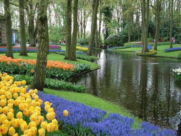 Keukenhof - Holanda (16)