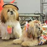 Festa Junina para cães e gatos reúne 50 pets no Boulevard Shopping