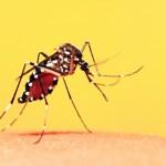 Entenda a febre amarela
